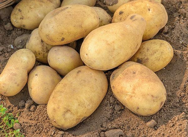 Cách chọn khoai tây để chiên ngon